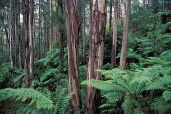 ozforest