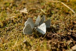 flutters1